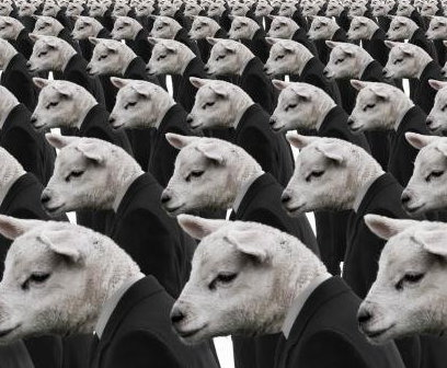 Conformity-Sheep