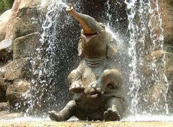 happy elephant