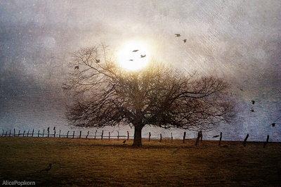 my favorite tree By AlicePopkorn