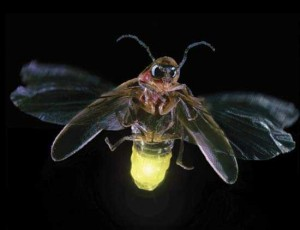 Fireflies and a positive side to the Lucifer effect
