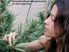 Alanis Morissette on using pot for creativity