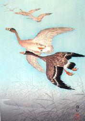 Six Wild Geese
